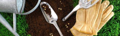 Семена газонных трав оптом